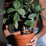 Zitruspflanzen, was Sie wissen sollten